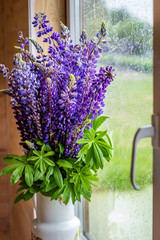 Bouquet of lupine flowers in a vase by the window
