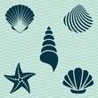 Sea shells - 66311318