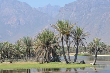 Виды Сокотры, пальмы на берегу пресного водоема