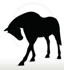 horse silhouette in standing still position