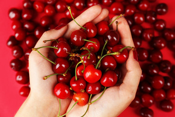 Sweet cherries in female hands, close up