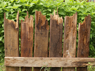 Fragment of fence of rotten boards on the background of green pl