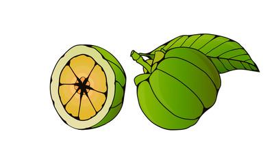 Garcinia Cambogia Fruit Isolated on White