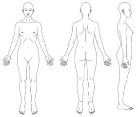 人体図女性の略図