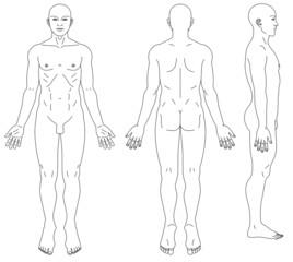 男性人体の略図
