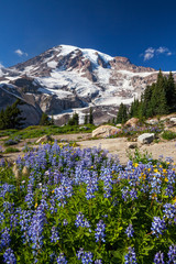 Mount Rainier and WIldflowers