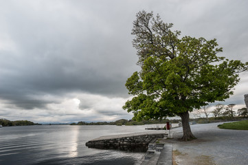 lone tree at edge of stormy lake