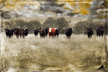 Cows in rural pasture land with grungy texture