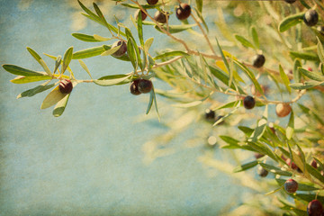Olives on the tree against blue sky.  Added paper texture