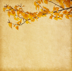 old paper with autumn leaves. Birch  ..