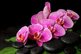 spa set of zen stones with drops, blooming twig of stripped viol