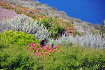 üppige vegetation auf vulkaninsel santorin
