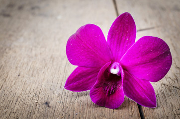 Pink  orchid (Phalaenopsis )