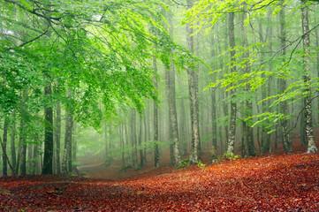 forest in sprin