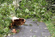 abgebrochener platanenstamm auf gehweg