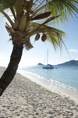 palm island st vincent and the grenadines caribbean 43