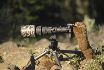 Marmot Photographer