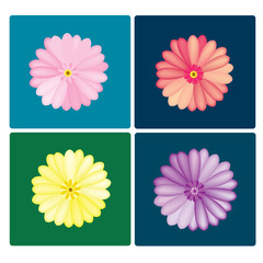 vector Gerbera colorful set on the colorful background