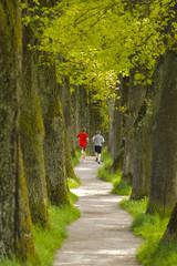 Joggen in Baumallee