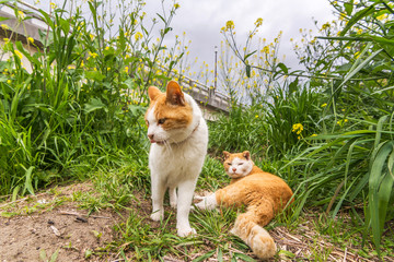 Two cats in the grass