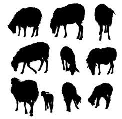 Sheep & Lamb Silhouette Set-Vector