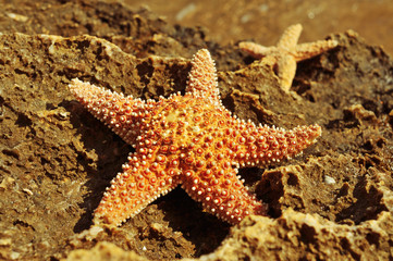 starfishes on a rock