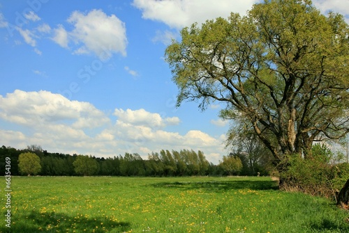 canvas print picture Wiese am Wald