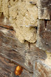 earthen plaster