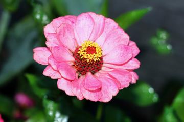 bella flor rosada