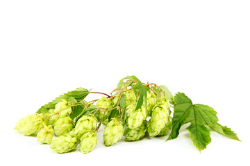Branch of fresh hops isolated on white background.