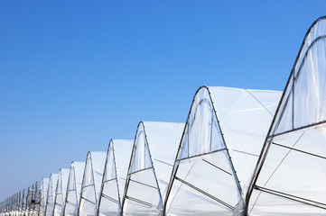 Rows of Greenhouse Tunels
