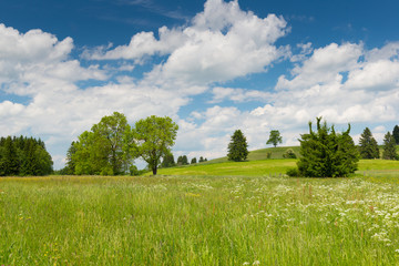 spring day with flower meadow and trees at blue sky in bavaria