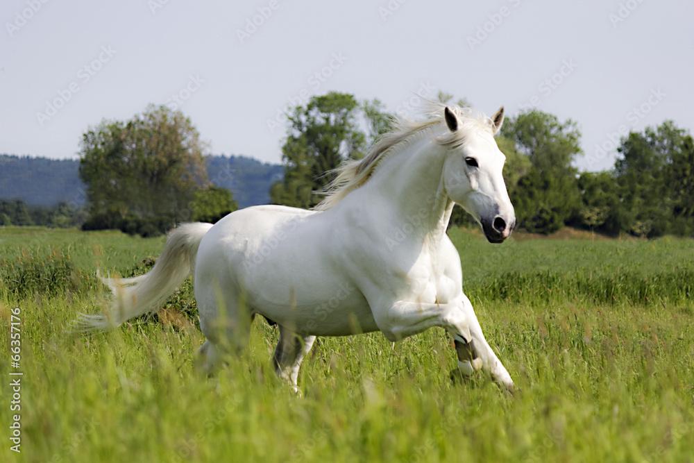 biały lea trawa - powiększenie