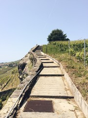 Steps and vineyards