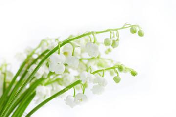Convallariae herba