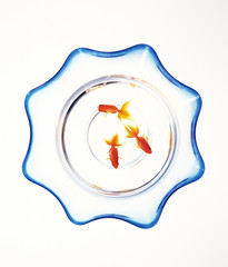 Goldfish in bowl, white background