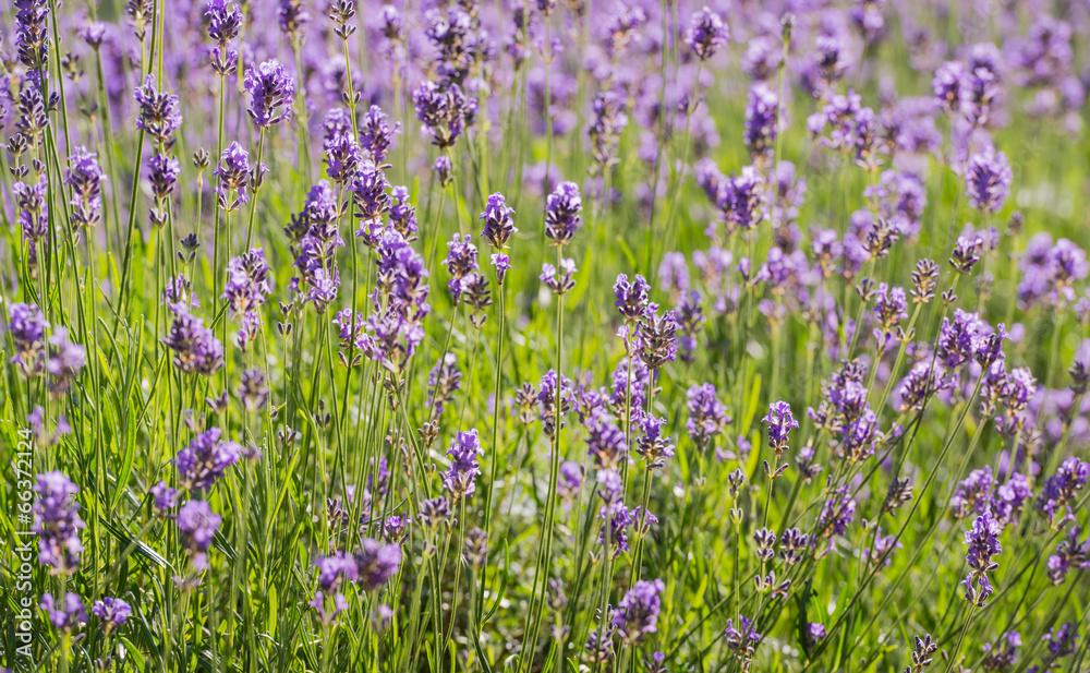 podświetlany zbliżenie zapach - powiększenie