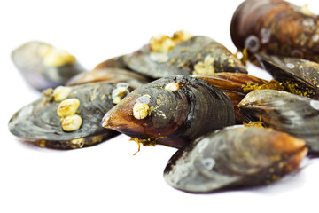 Raw mussels isolated on a white  background.