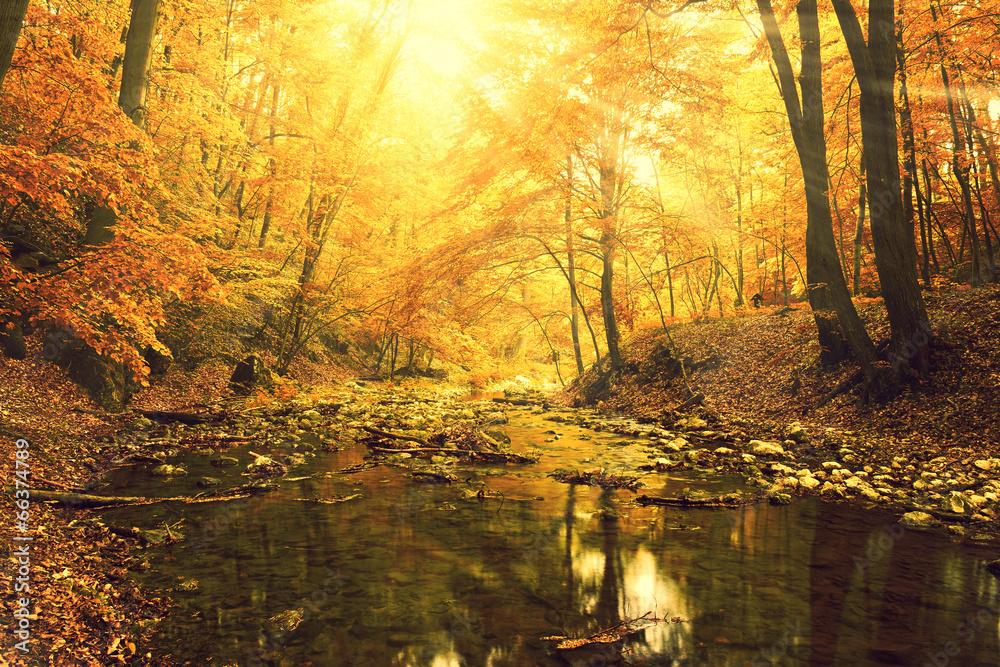 park creek jesień - powiększenie