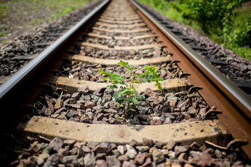 Small plant grow up between the railway