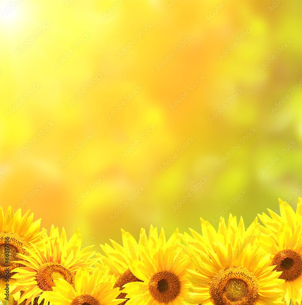 żółty lato słońce - powiększenie