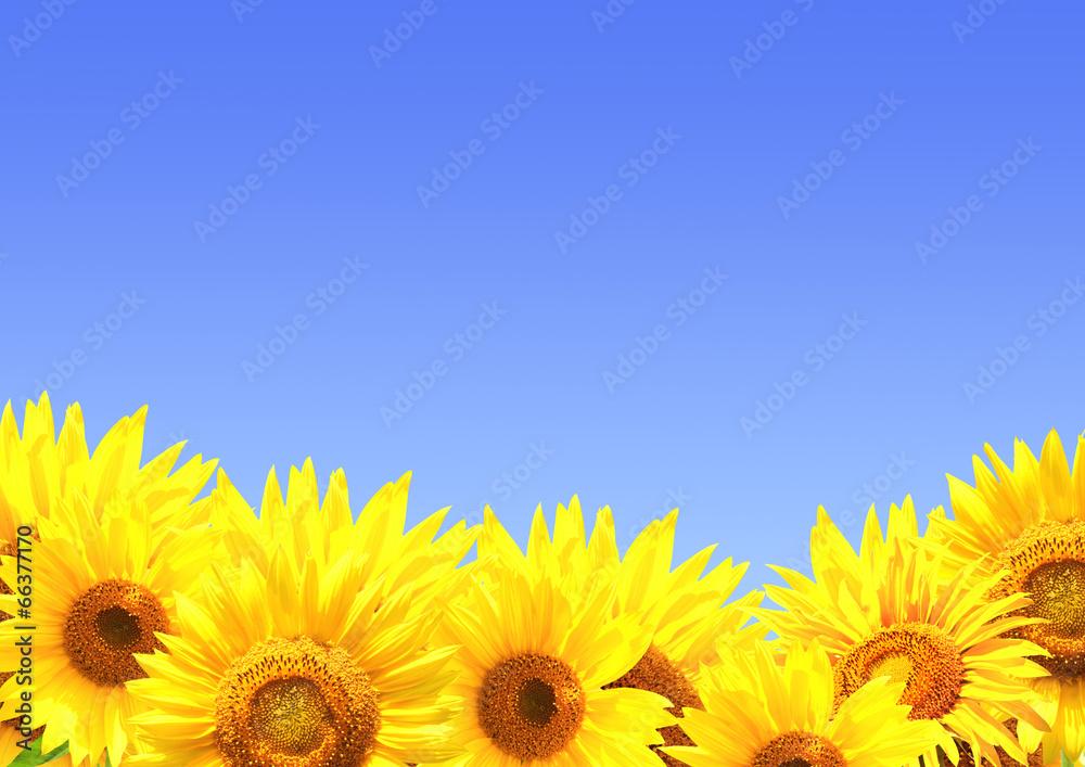 żółty lato granica - powiększenie