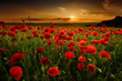 Poppy field at sunset - 66379591
