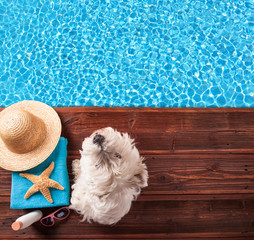 Summer concept with dog on wooden planks
