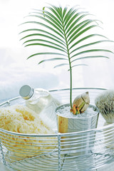 Toiletries in a basket with a potted frond