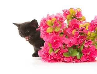 Black kitten and red flower