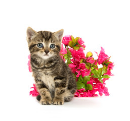 tabby kitten and flowers