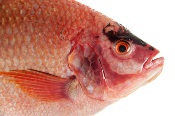 Raw Red tilapia