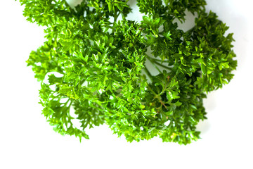 bunch of parsley on a white background. healthy spring greens