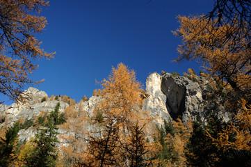 Herbstlicher Bergwald im Val de Juel